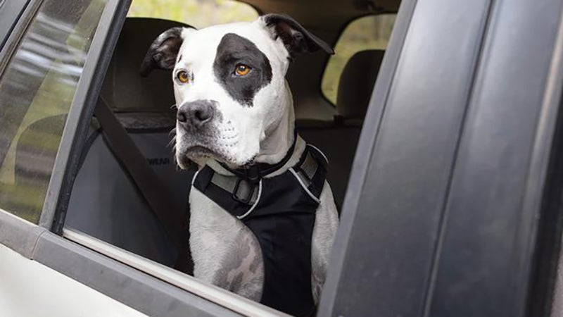 The Load Up allows dogs to naturally sit or lie down in the back seat, or even poke their head out the window.