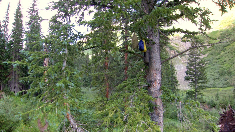 """A typical """"bear hang"""" on the Aspen Four Pass Loop. They could have saved themselves the hassle by just leaving it on the ground—it would have been no less effective."""
