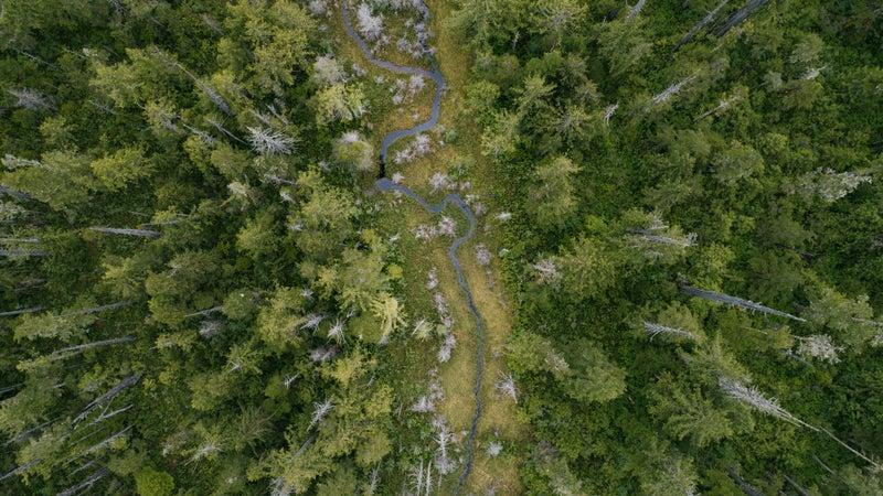 The woods of northern British Columbia.