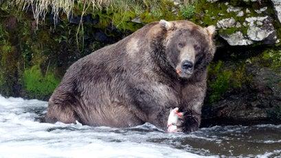 Otis enjoys some salmon at his favorite fishing spot in Brooks Falls.