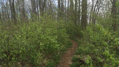 The Appalachian Trail in White County, Georgia.