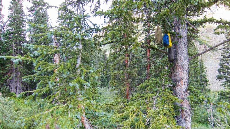 Completely ineffective: a typical bear hang on the Aspen Four Pass Loop
