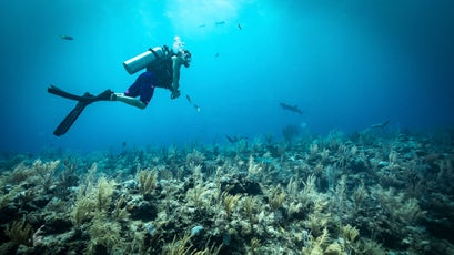 Belize Barrier Reef.
