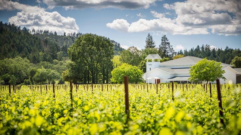 Silver Oak's vineyard.