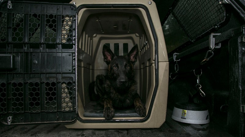"""The G1 is finding popularity with the military, police departments, and search and rescue workers. Edmonds describes their dogs as, """"The most valuable and important dogs in the world.""""Both the NYPD and Gunner's local department in Nashville use G1s to house and transport their working dogs."""