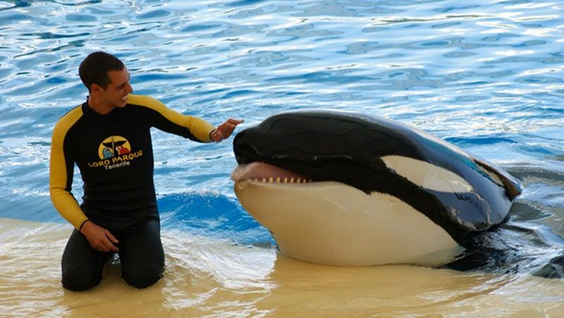 Orca Ocean trainer Alexis Martínez with Keto.