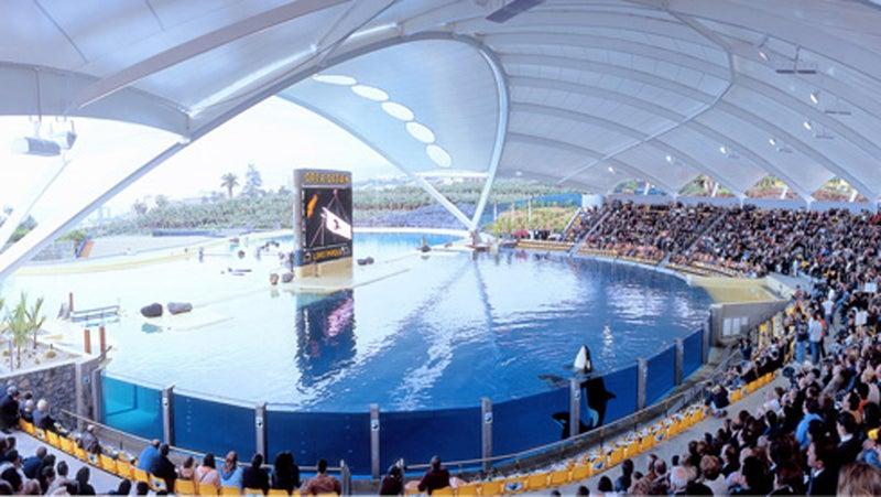 The main show pool at Loro Parque's Orca Ocean.
