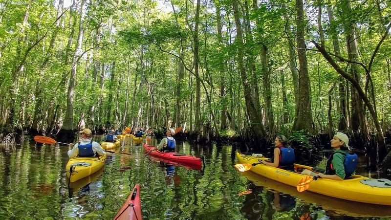 Kayaking through Four Holes Swamp