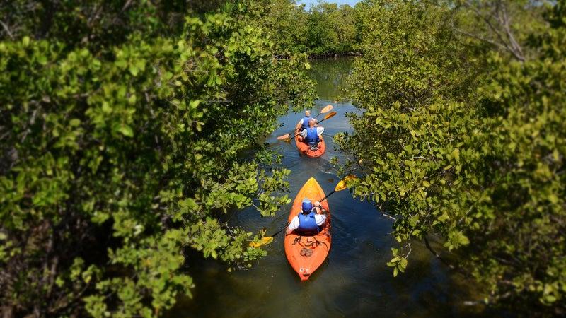 Paddling in Oleta River State Park