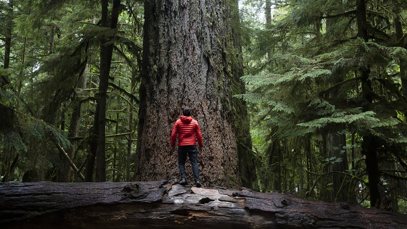 Hiking around Cathedral Grove on Vancouver Island