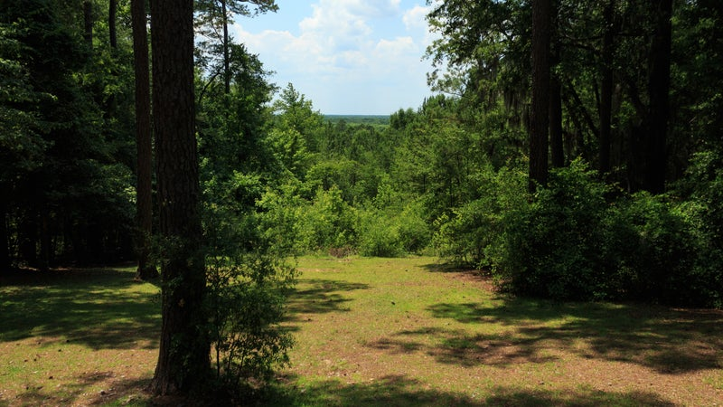 Forest in Poinsett State Park