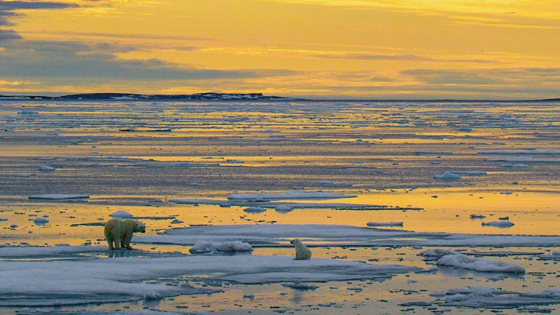 With the Southern Beaufort Sea population on the verge of collapse, any disturbance to ANWR puts its future at risk.