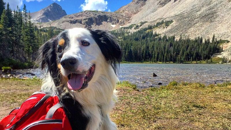 Dog in national park