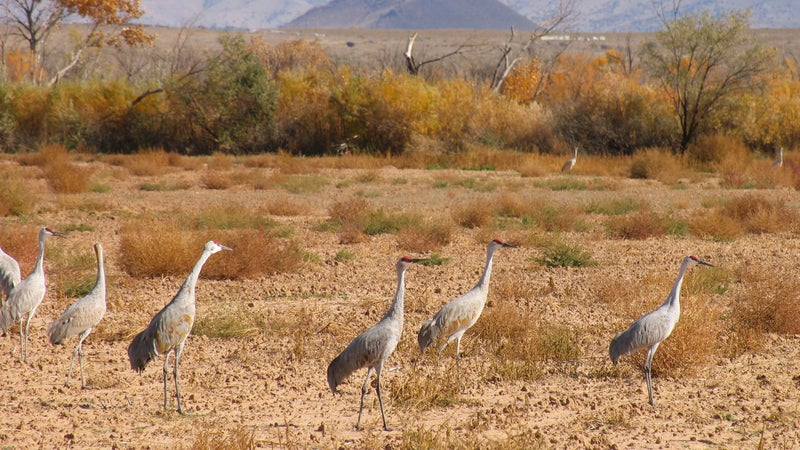 Bird Watching Festival