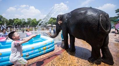 Elephants entertaining tourists at Chinese wildlife parks