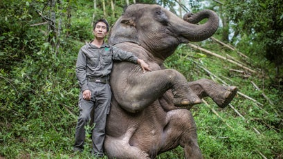 China's Wild Elephant Valley in Jinghong