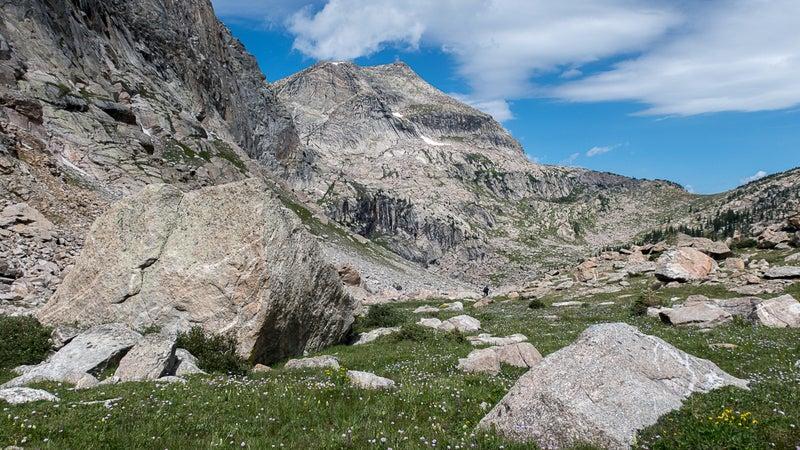 Wildflowers and Ptarmigan Mountain