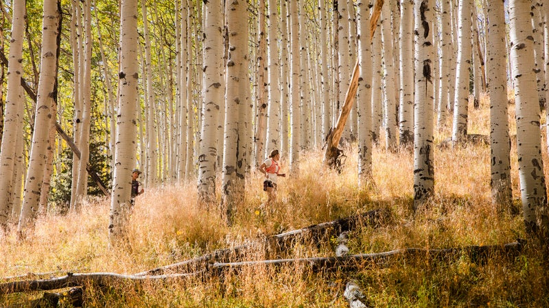 A group run through the aspens at one of Krar's training camps
