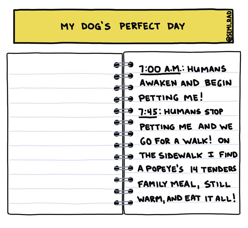 my dog's perfect day