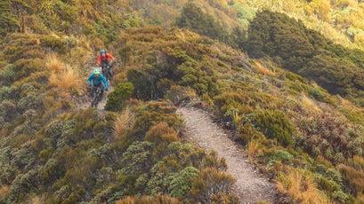 Paparoa Track
