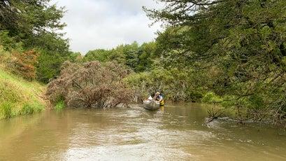 Negotiating tangles of fallen cedar trees