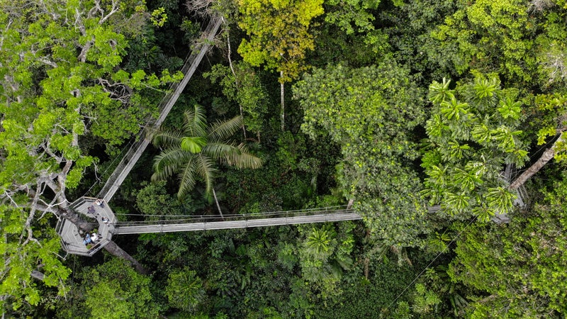 Iwokrama Canopy Walkway, Guyana
