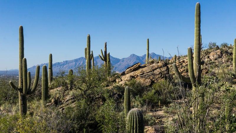 Saguaro East District