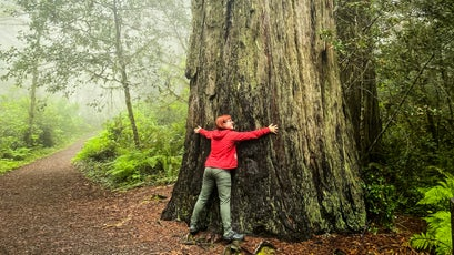 The author hugging a redwood