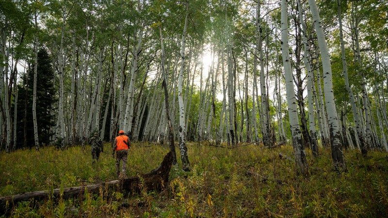 Chasing elk with Tim Montana in Routt National Forest in September.