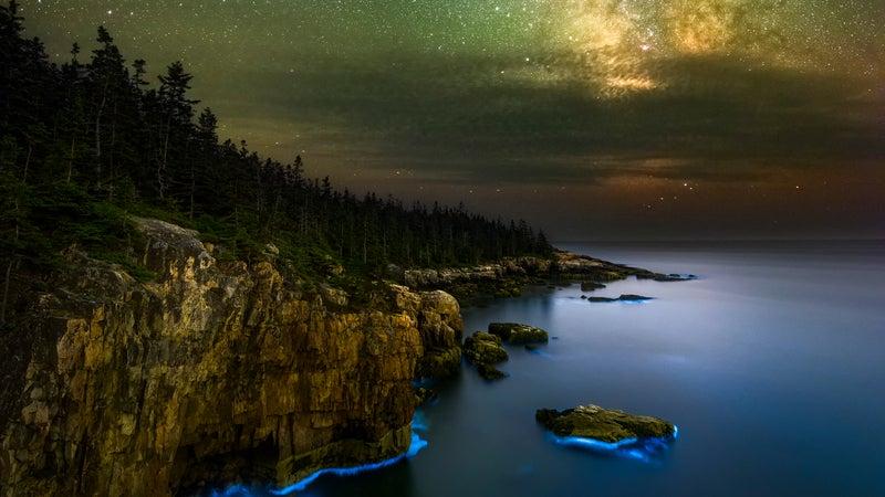 Coastal bioluminescence