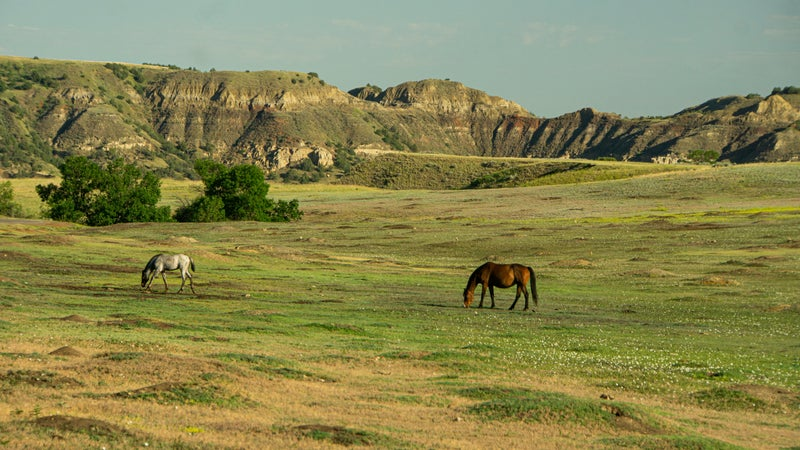 The park is full of big wildlife, from wild horses to bison