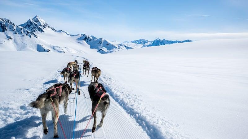 Dogsledding on a mountain peak.