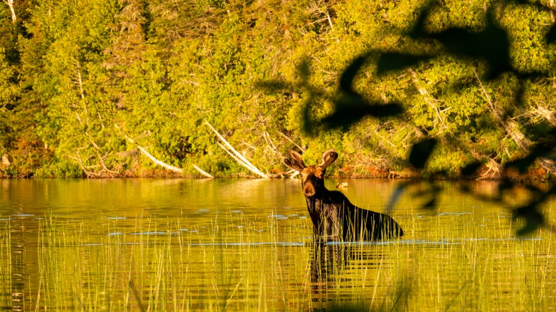 A visit with an Isle Royale local