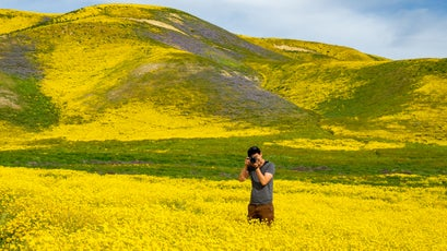 Blooms at Carrizo Plain National Monument