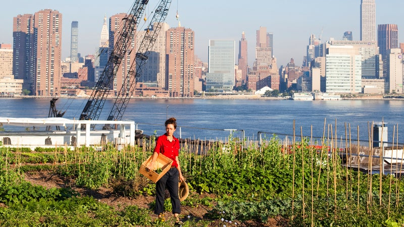 Urban female farmer, Brooklyn, New York City, New York State, USA