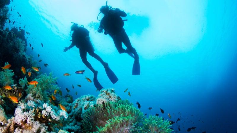 Scuba Diving at Coral Reef