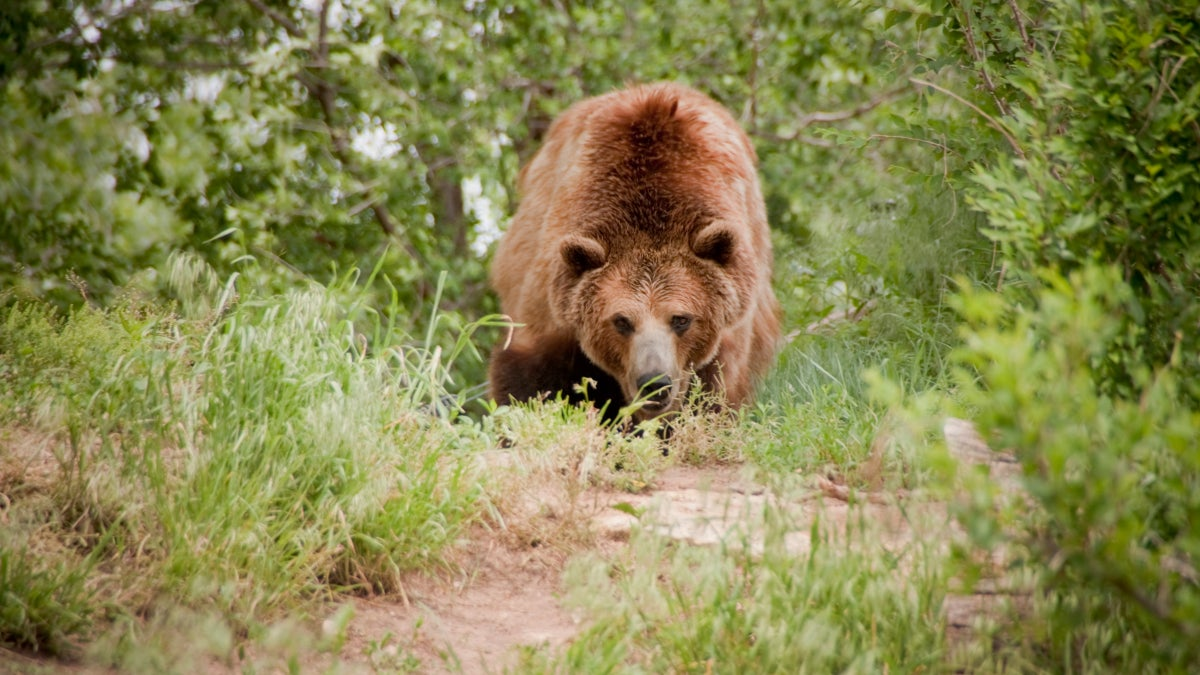 Bear Attack Fatalities Are Up This Year. Is it a Trend, or Just a Coincidence?