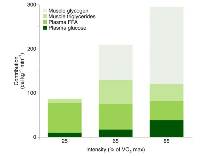 Chart of fuel mixture at different exercise intensities