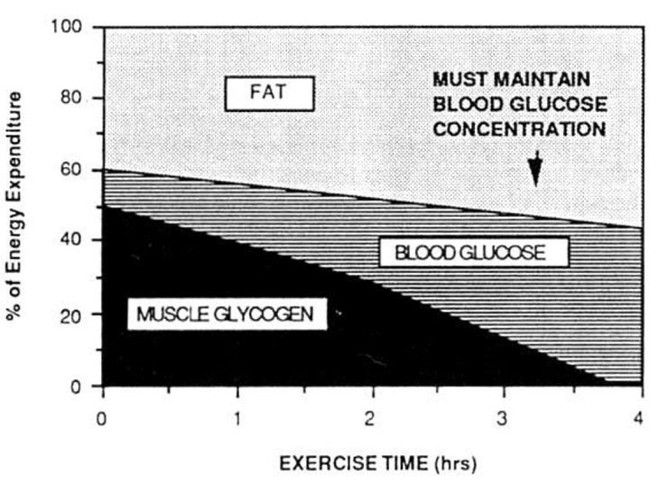 Chart of how the fuel mix shifts during prolonged exercise