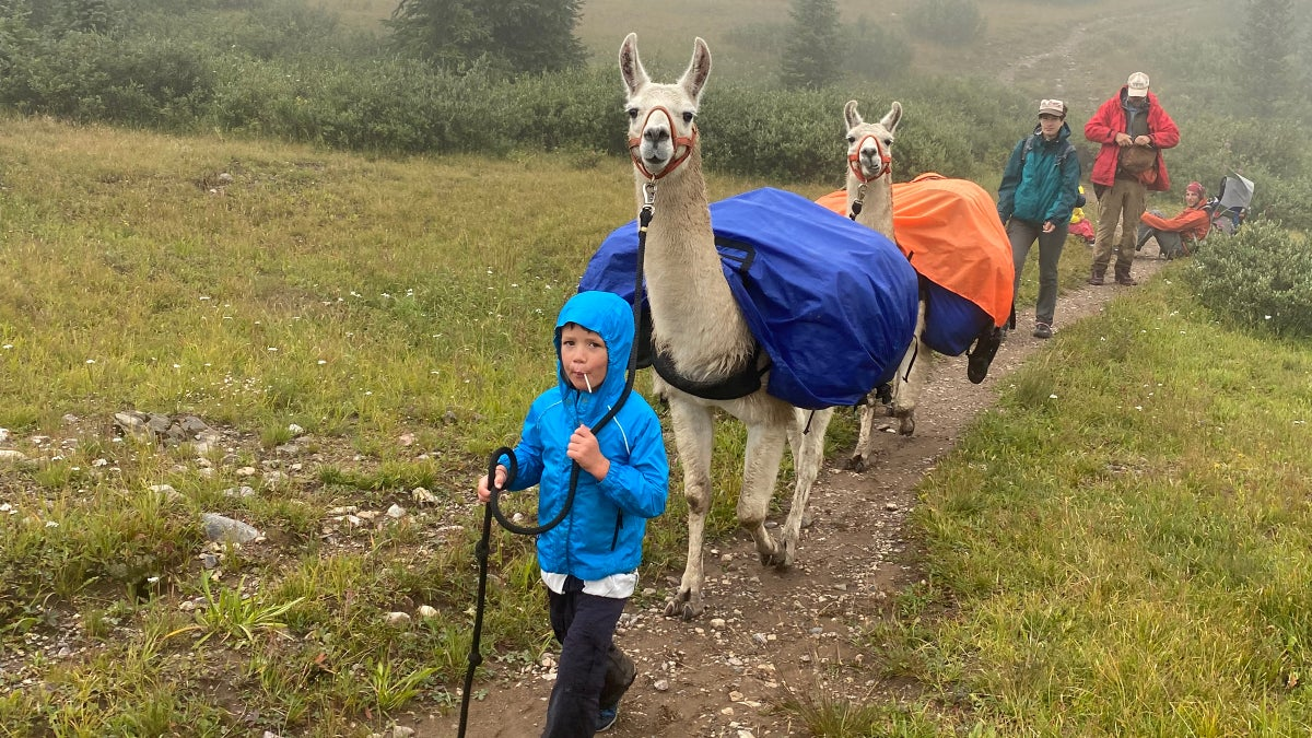 Want to Travel in the Backcountry with Small Children? Rent a Llama.