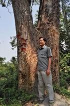 Journalist Uttam Saikia beside a tiger-mauled tree