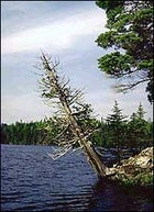 Full steam ahead: a portage-free peak at the Boundary Waters