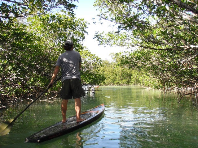 Float through mangrove creeks on your SUP in the Floriday Keys