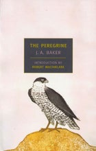 J. A. Baker's The Peregrine