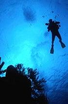 Feeling blue: a diver descends onto the reef off Belize