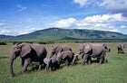 Follow your nose: elephants fall into line in Kenya