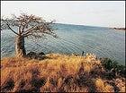A lone Baobab stands guard on the Angolan coast near Quiçama Park.