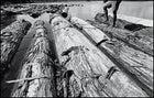 Illegal mahogany seized by Ibama—Brazil's environmental agency—awaits a court ruling on the upper reaches of the Rio Xingu.