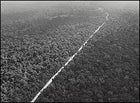 If you build it, they will come: only the price of mahogany can finance a new road in the Amazon.
