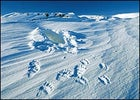 Fresh tracks and a winter den left behind by a polar bear and her cub in the refuge's 1002 region, March 2002